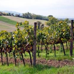 Torgiano, la prima Doc dell'Umbria festeggia 50 anni